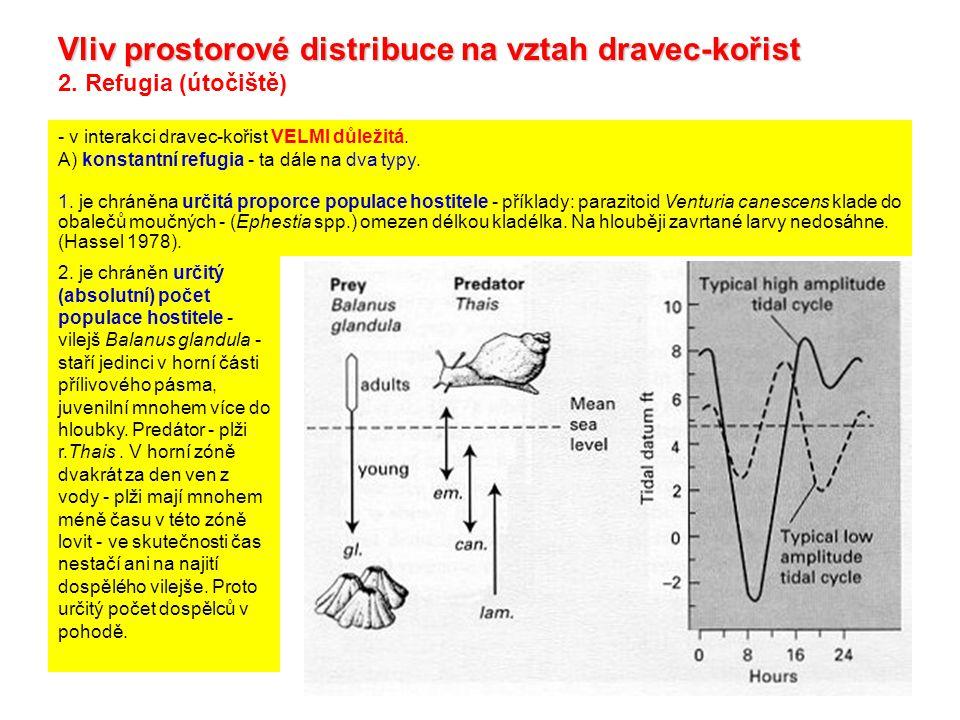 Vliv prostorové distribuce na vztah dravec-kořist 2. Refugia (útočiště) - v interakci dravec-kořist VELMI důležitá. A) konstantní refugia - ta dále na