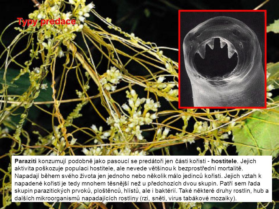 Paraziti konzumují podobně jako pasoucí se predátoři jen části kořisti - hostitele. Jejich aktivita poškozuje populaci hostitele, ale nevede většinou