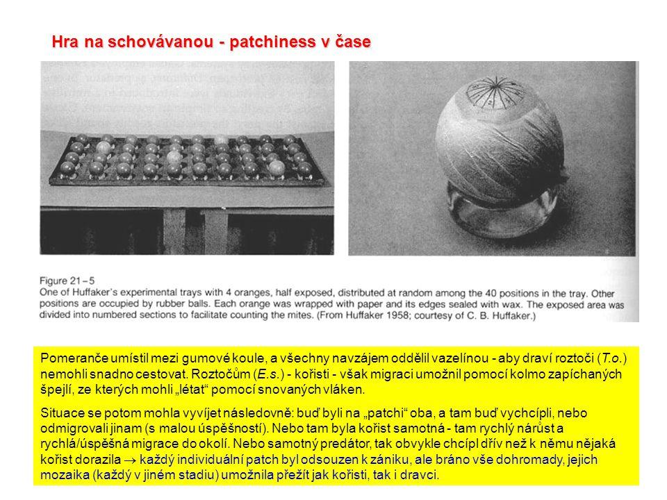 Hra na schovávanou - patchiness v čase Pomeranče umístil mezi gumové koule, a všechny navzájem oddělil vazelínou - aby draví roztoči (T.o.) nemohli snadno cestovat.