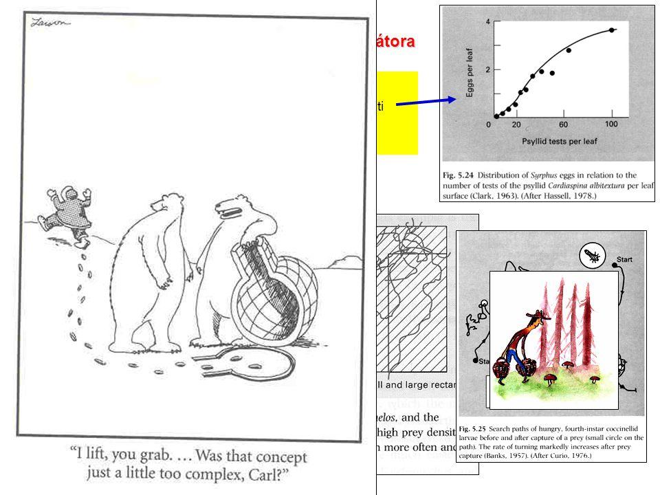 Chování uvnitř shluku kořisti - opět škatulky: pasivní - např. parasitoid klade vejce tam, kde je hodně kořisti aktivní - dravec mění své chování - zv