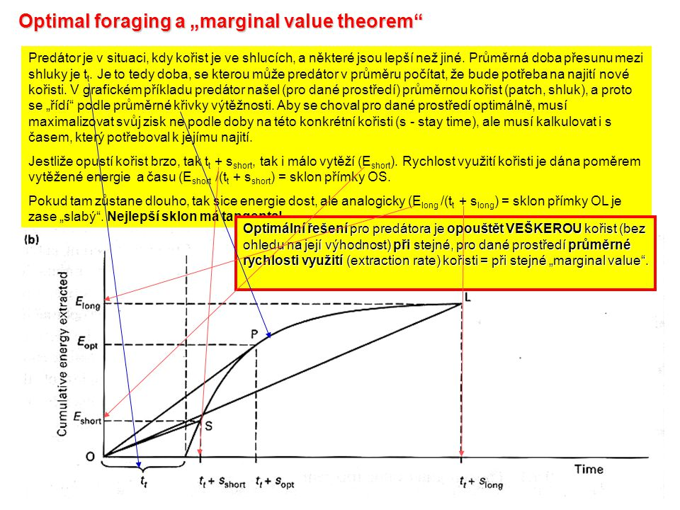 "Optimal foraging a ""marginal value theorem"" Predátor je v situaci, kdy kořist je ve shlucích, a některé jsou lepší než jiné. Průměrná doba přesunu mez"