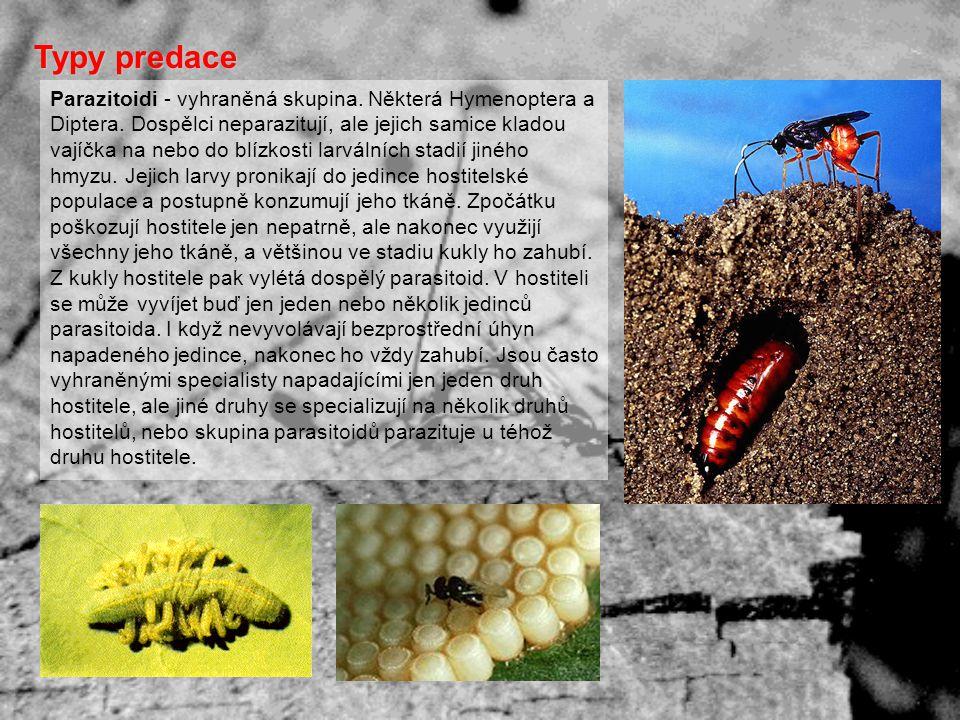 Parazitoidi - vyhraněná skupina. Některá Hymenoptera a Diptera. Dospělci neparazitují, ale jejich samice kladou vajíčka na nebo do blízkosti larválníc