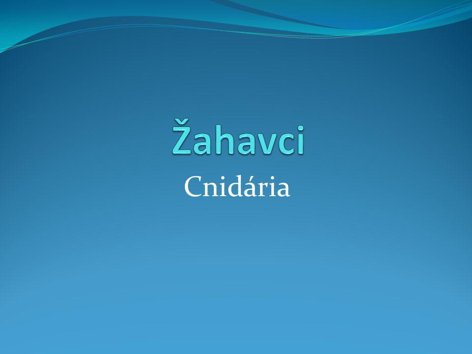 Systém žahavců  korálnatci (Anthozoa)  kalichovky (Staurozoa)  čtyřhranky (Cubozoa)  medúzovci (Scyphozoa)  polypovci (Hydrozoa) Medusozoa