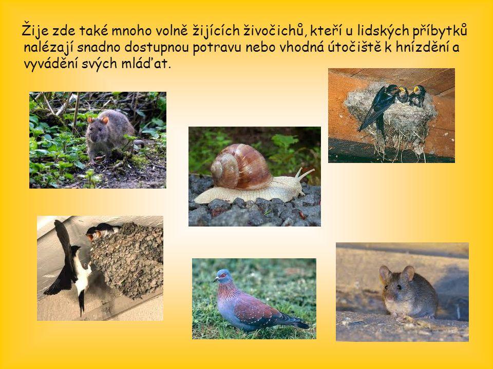 Žije zde také mnoho volně žijících živočichů, kteří u lidských příbytků nalézají snadno dostupnou potravu nebo vhodná útočiště k hnízdění a vyvádění s