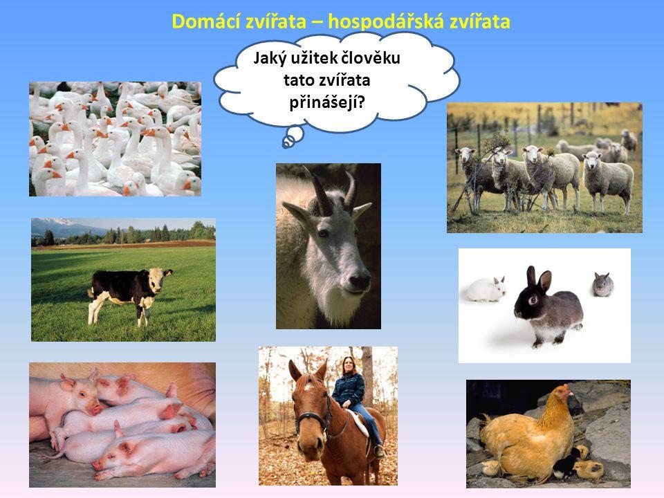 Domácí zvířata – hospodářská zvířata Jaký užitek člověku tato zvířata přinášejí?