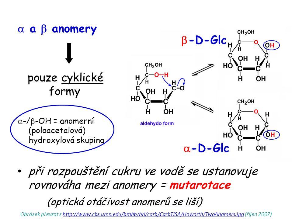  a  anomery pouze cyklické formy  -/  -OH = anomerní (poloacetalová) hydroxylová skupina při rozpouštění cukru ve vodě se ustanovuje rovnováha mezi anomery = mutarotace (optická otáčivost anomerů se liší)  -D-Glc  -D-Glc Obrázek převzat z http://www.cbs.umn.edu/bmbb/brl/carb/CarbTJSA/Haworth/TwoAnomers.jpg (říjen 2007)http://www.cbs.umn.edu/bmbb/brl/carb/CarbTJSA/Haworth/TwoAnomers.jpg