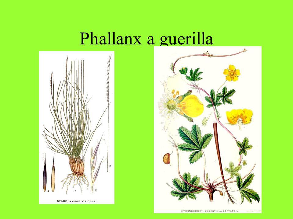 Phallanx a guerilla