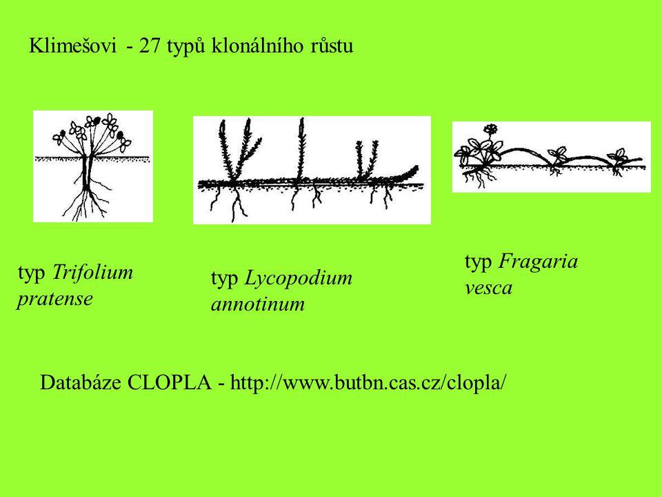 Klimešovi - 27 typů klonálního růstu typ Trifolium pratense typ Lycopodium annotinum typ Fragaria vesca Databáze CLOPLA - http://www.butbn.cas.cz/clop