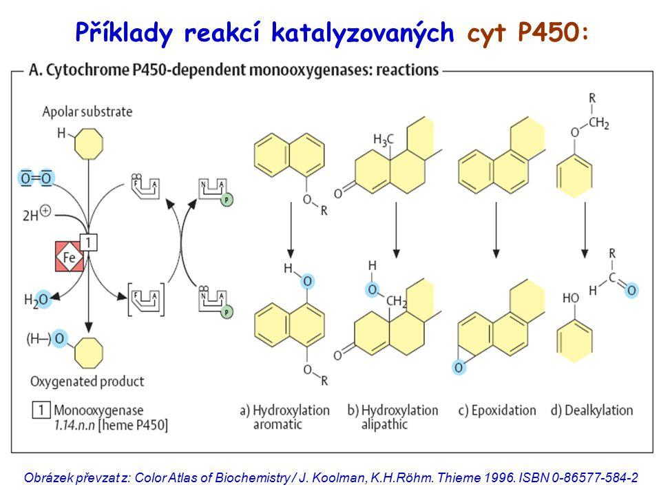 Obrázek převzat z: Color Atlas of Biochemistry / J. Koolman, K.H.Röhm. Thieme 1996. ISBN 0-86577-584-2 Příklady reakcí katalyzovaných cyt P450: