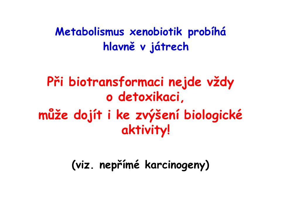 Metabolismus xenobiotik probíhá hlavně v játrech Při biotransformaci nejde vždy o detoxikaci, může dojít i ke zvýšení biologické aktivity! (viz. nepří