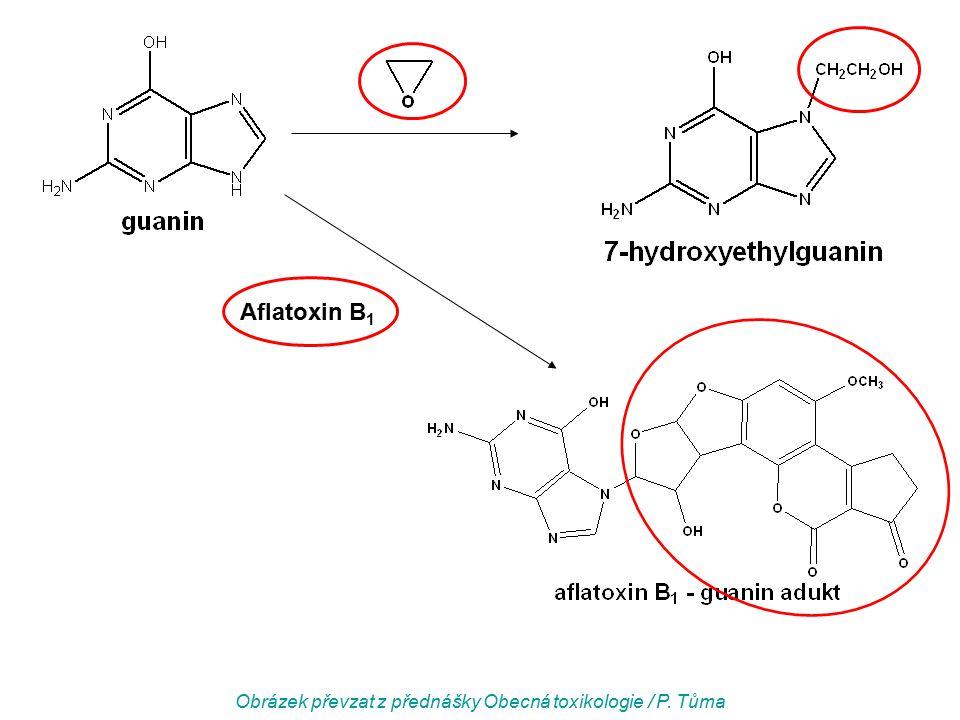 Aflatoxin B 1 Obrázek převzat z přednášky Obecná toxikologie / P. Tůma