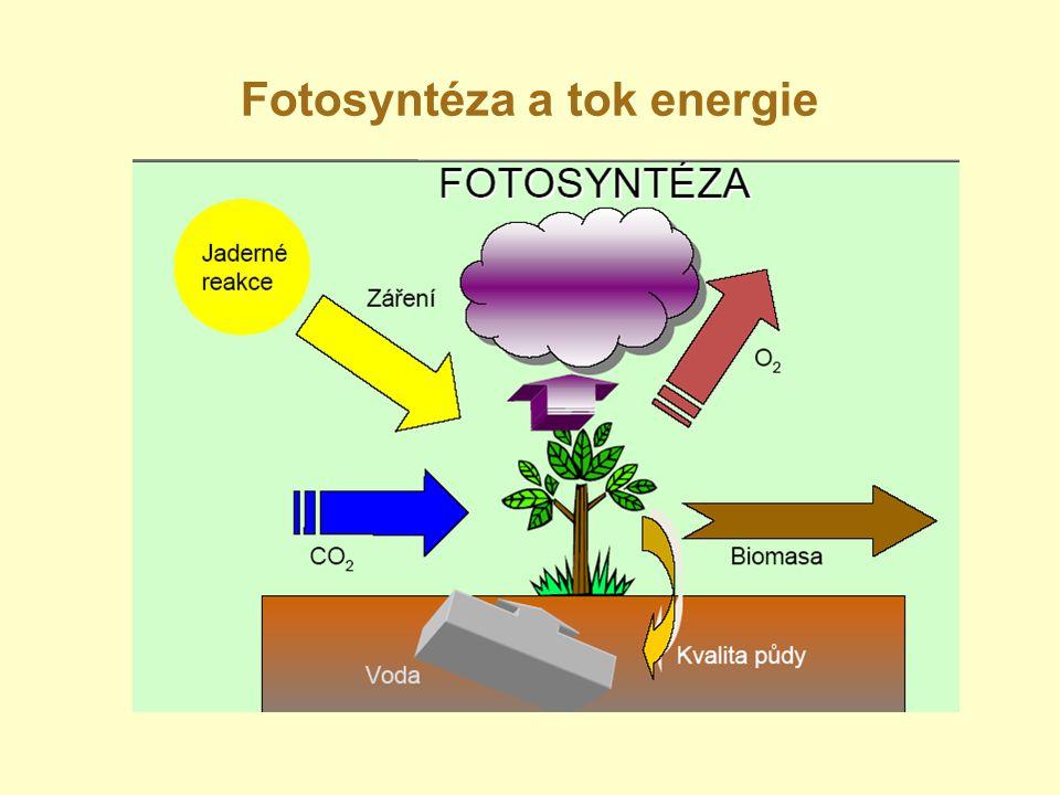 Fotosyntéza a tok energie Prof. Nátr, 2009