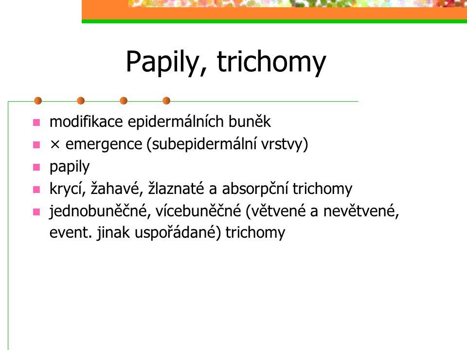 Papily, trichomy modifikace epidermálních buněk × emergence (subepidermální vrstvy) papily krycí, žahavé, žlaznaté a absorpční trichomy jednobuněčné, vícebuněčné (větvené a nevětvené, event.