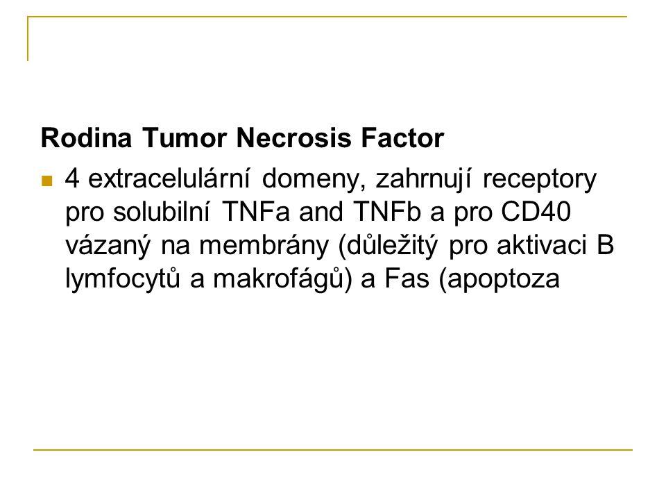 Rodina Tumor Necrosis Factor 4 extracelulární domeny, zahrnují receptory pro solubilní TNFa and TNFb a pro CD40 vázaný na membrány (důležitý pro aktivaci B lymfocytů a makrofágů) a Fas (apoptoza
