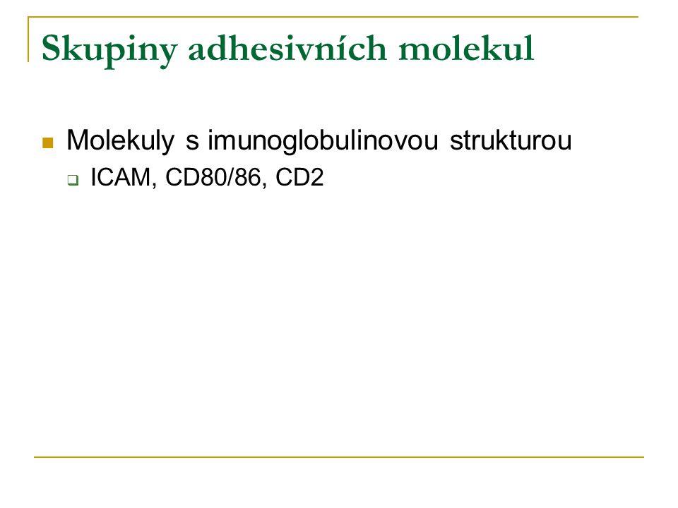 Skupiny adhesivních molekul Molekuly s imunoglobulinovou strukturou  ICAM, CD80/86, CD2