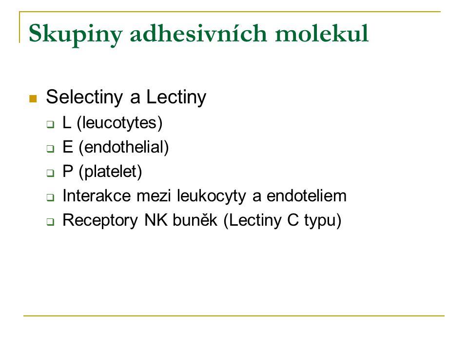 Skupiny adhesivních molekul Selectiny a Lectiny  L (leucotytes)  E (endothelial)  P (platelet)  Interakce mezi leukocyty a endoteliem  Receptory NK buněk (Lectiny C typu)