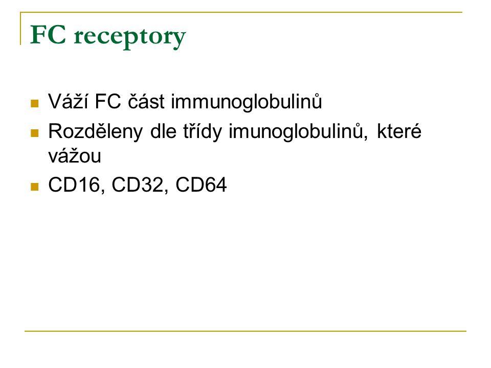FC receptory Váží FC část immunoglobulinů Rozděleny dle třídy imunoglobulinů, které vážou CD16, CD32, CD64