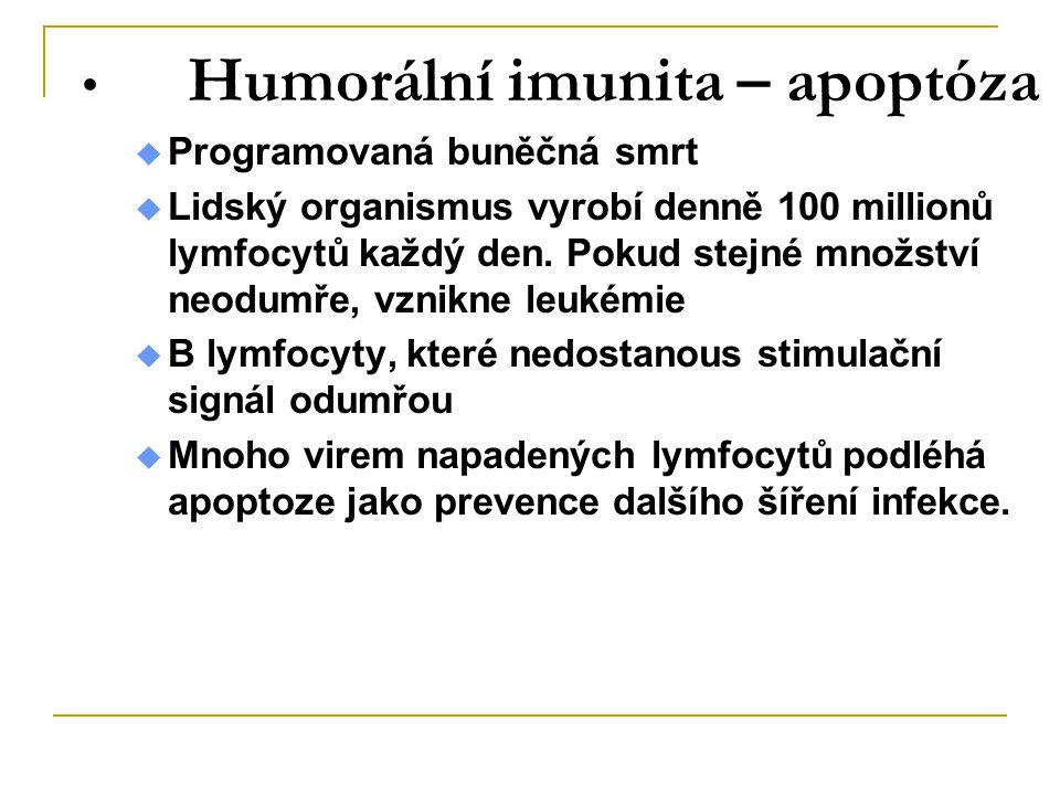 Humorální imunita – apoptóza  Programovaná buněčná smrt  Lidský organismus vyrobí denně 100 millionů lymfocytů každý den. Pokud stejné množství neod