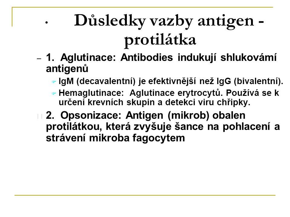 Důsledky vazby antigen - protilátka – 1. Aglutinace: Antibodies indukují shlukovámí antigenů  IgM (decavalentní) je efektivnější než IgG (bivalentní)
