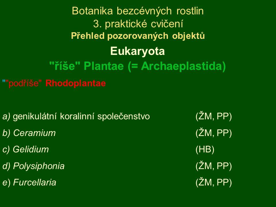 ZÁKLADNÍ CHARAKTERISTIKA - opakování plastidy (rhodoplasty) pocházející z primární endosymbiózy buňky vždy bez bičíkatých stádií rhodoplasty s charakteristickým složením fykobilinů a jednotlivě či po dvojicích probíhajícími thylakoidy pohlavní rozmnožování (pokud je známo) oogamické ekologie: cca 95% druhů v mořích, sladkovodní druhy typické pro oligotrofní habitaty skupina s výrazným latitudinálním gradientem diverzity opakovaný vznik mnohobuněčnosti, makroskopické pletivné stélky ve třídě Florideophyceae Rhodoplantae Rhodophyta
