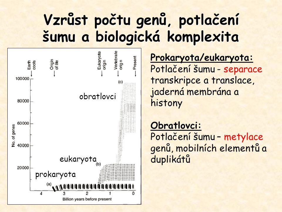 Vzrůst počtu genů, potlačení šumu a biologická komplexita Prokaryota/eukaryota: Potlačení šumu - separace transkripce a translace, jaderná membrána a