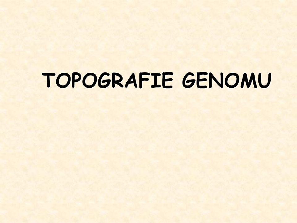 TOPOGRAFIE GENOMU