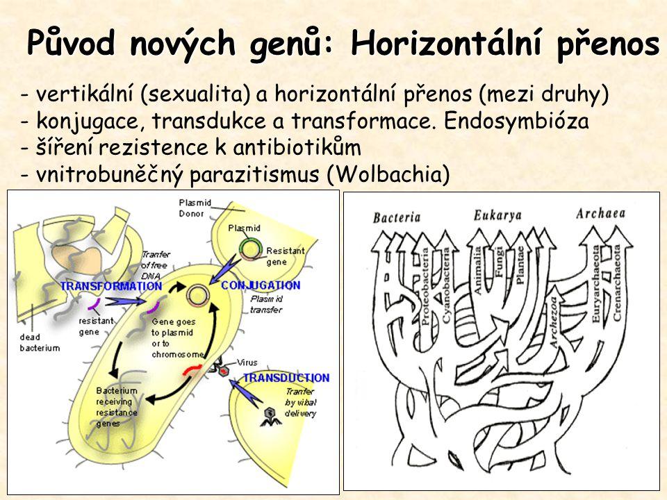 Původ nových genů: Horizontální přenos - vertikální (sexualita) a horizontální přenos (mezi druhy) - konjugace, transdukce a transformace. Endosymbióz