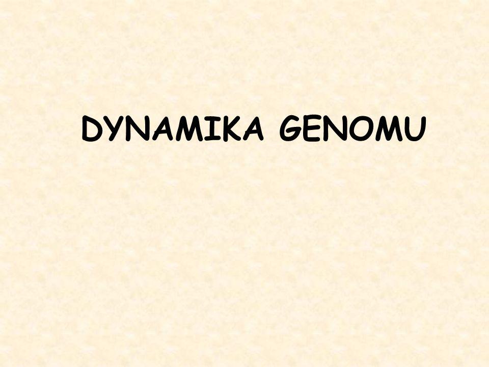 DYNAMIKA GENOMU