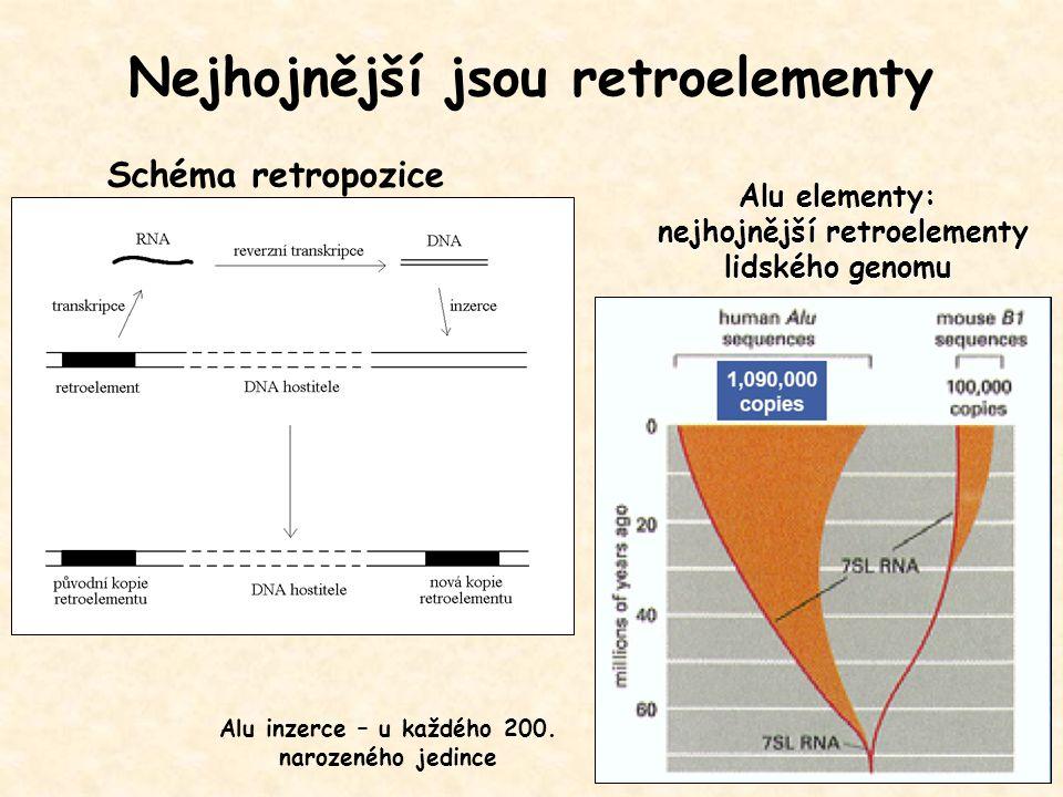 Nejhojnější jsou retroelementy Alu inzerce – u každého 200. narozeného jedince Schéma retropozice Alu elementy: nejhojnější retroelementy lidského gen