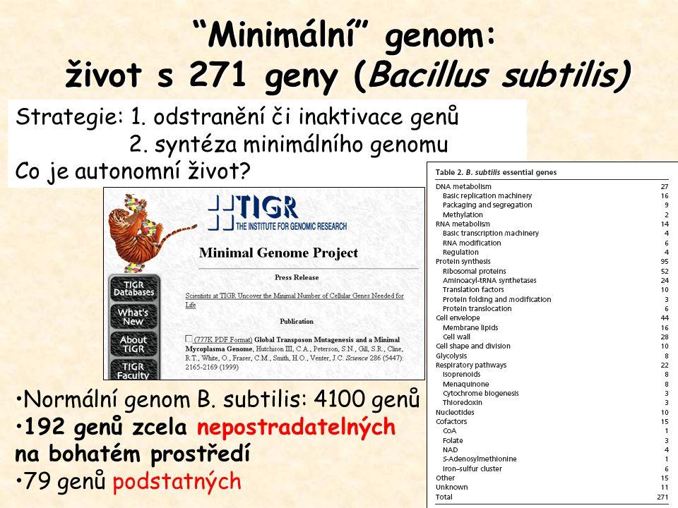 """""""Minimální"""" genom: život s 271 geny (Bacillus subtilis) Normální genom B. subtilis: 4100 genů 192 genů zcela nepostradatelných na bohatém prostředí 79"""