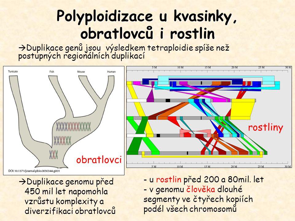 Polyploidizace u kvasinky, obratlovců i rostlin  Duplikace genomu před 450 mil let napomohla vzrůstu komplexity a diverzifikaci obratlovců - u rostli