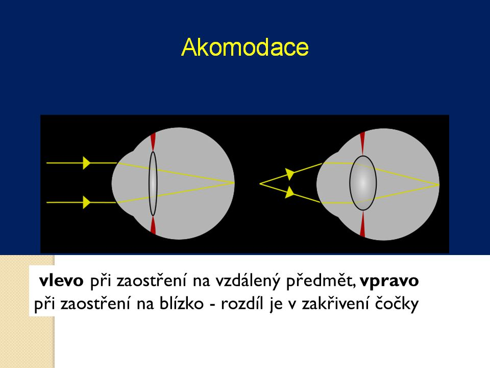 vlevo při zaostření na vzdálený předmět, vpravo při zaostření na blízko - rozdíl je v zakřivení čočky
