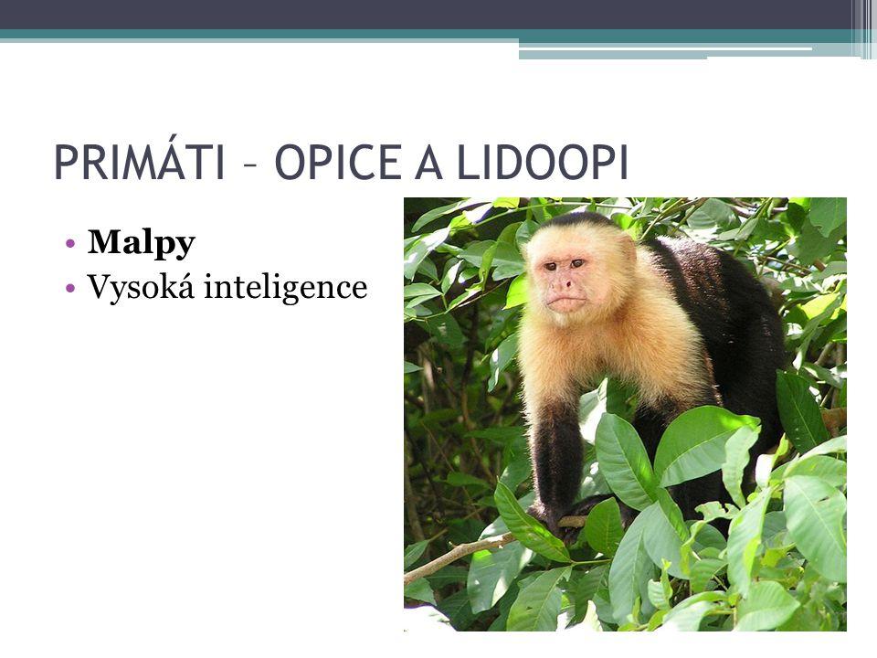 PRIMÁTI – OPICE A LIDOOPI Malpy Vysoká inteligence