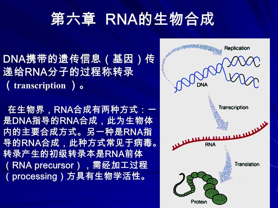 第六章 RNA 的生物合成 DNA 携带的遗传信息(基因)传 递给 RNA 分子的过程称转录 ( transcription )。 在生物界, RNA 合成有两种方式:一 是 DNA 指导的 RNA 合成,此为生物体 内的主要合成方式。另一种是 RNA 指 导的 RNA 合成,此种方式常见于病毒。 转录产生的初级转录本是 RNA 前体 ( RNA precursor ),需经加工过程 ( processing )方具有生物学活性。