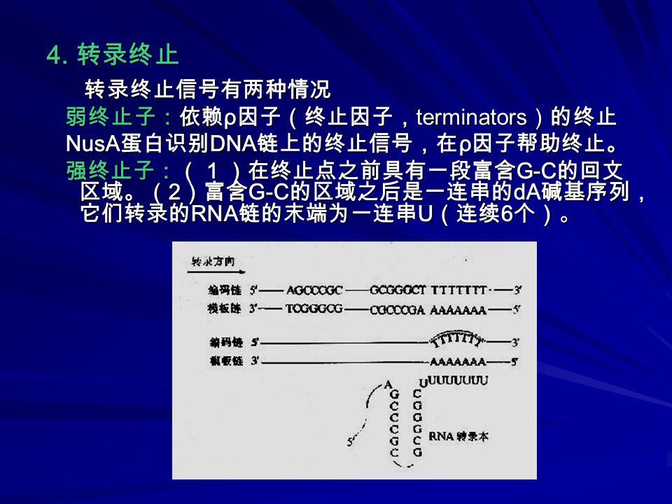4. 转录终止 转录终止信号有两种情况 转录终止信号有两种情况 弱终止子:依赖 ρ 因子(终止因子, terminators )的终止 弱终止子:依赖 ρ 因子(终止因子, terminators )的终止 NusA 蛋白识别 DNA 链上的终止信号,在 ρ 因子帮助终止。 NusA 蛋白识别 DN