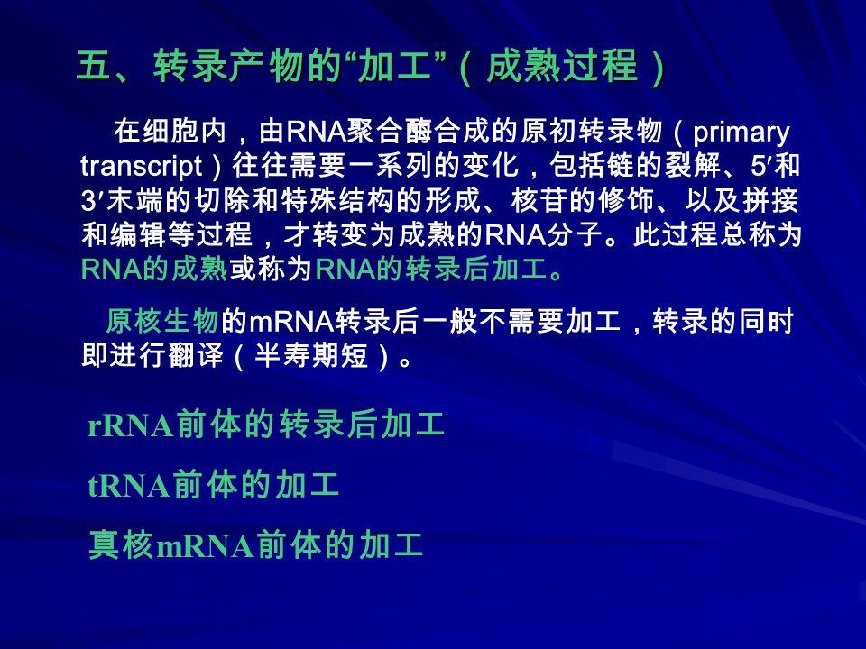 五、转录产物的 加工 (成熟过程) 在细胞内,由 RNA 聚合酶合成的原初转录物( primary transcript )往往需要一系列的变化,包括链的裂解、 5 和 3 末端的切除和特殊结构的形成、核苷的修饰、以及拼接 和编辑等过程,才转变为成熟的 RNA 分子。此过程总称为 RNA 的成熟或称为 RNA 的转录后加工。 原核生物的 mRNA 转录后一般不需要加工,转录的同时 即进行翻译(半寿期短)。 rRNA 前体的转录后加工 tRNA 前体的加工 真核 mRNA 前体的加工