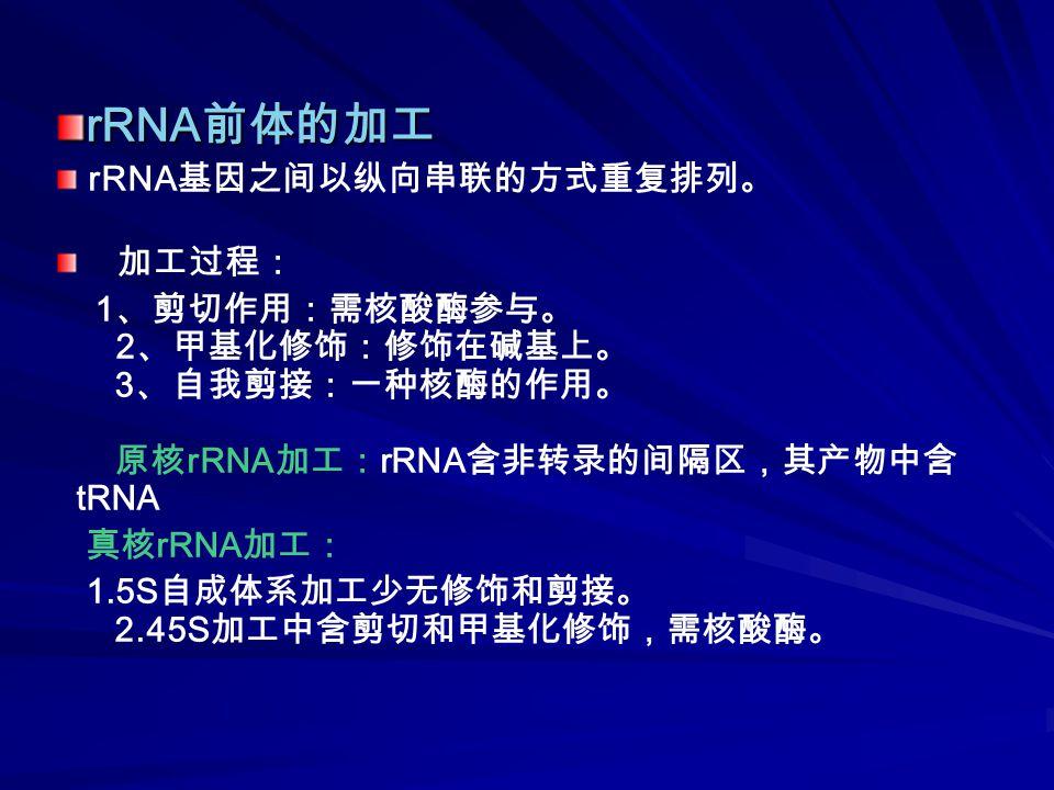 rRNA 前体的加工 rRNA 基因之间以纵向串联的方式重复排列。 加工过程: 1 、剪切作用:需核酸酶参与。 2 、甲基化修饰:修饰在碱基上。 3 、自我剪接:一种核酶的作用。 原核 rRNA 加工: rRNA 含非转录的间隔区,其产物中含 tRNA 真核 rRNA 加工: 1.5S 自成体系加工少无修饰和剪接。 2.45S 加工中含剪切和甲基化修饰,需核酸酶。