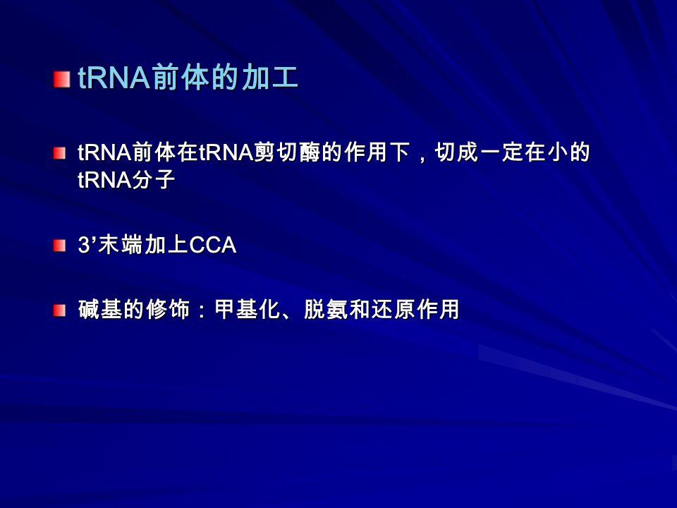 tRNA 前体的加工 tRNA 前体在 tRNA 剪切酶的作用下,切成一定在小的 tRNA 分子 3' 末端加上 CCA 碱基的修饰:甲基化、脱氨和还原作用