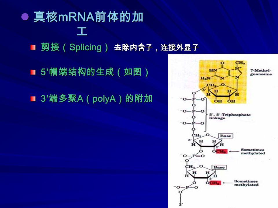 真核 mRNA 前体的加 工 真核 mRNA 前体的加 工 剪接( Splicing ) 去除内含子,连接外显子 5' 帽端结构的生成(如图) 3' 端多聚 A ( polyA )的附加