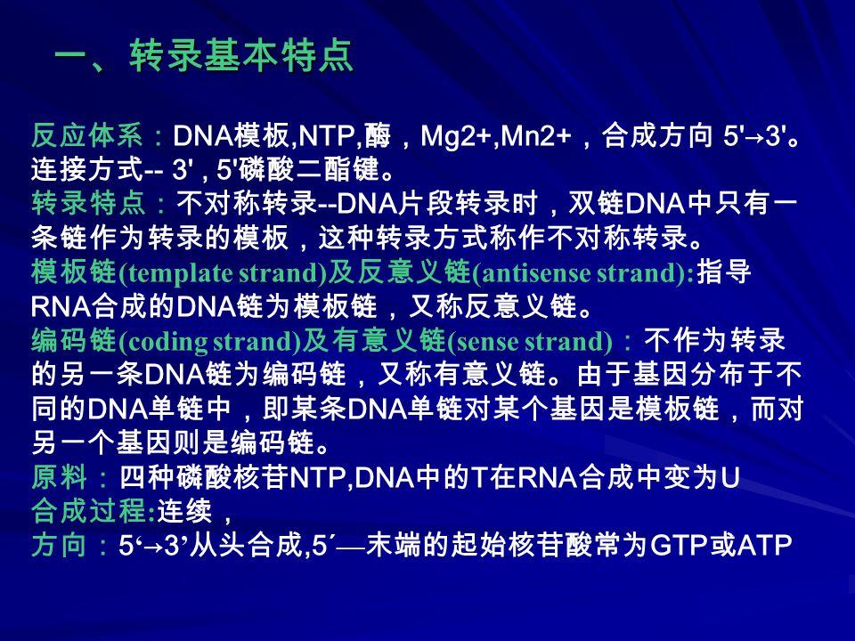 四、转录过程的选择性抑制剂 放线菌素 D 利福平 α -鹅膏蕈碱 原核抑制 不抑制 真核抑制不抑制抑制 RNA 聚合酶Ⅱ