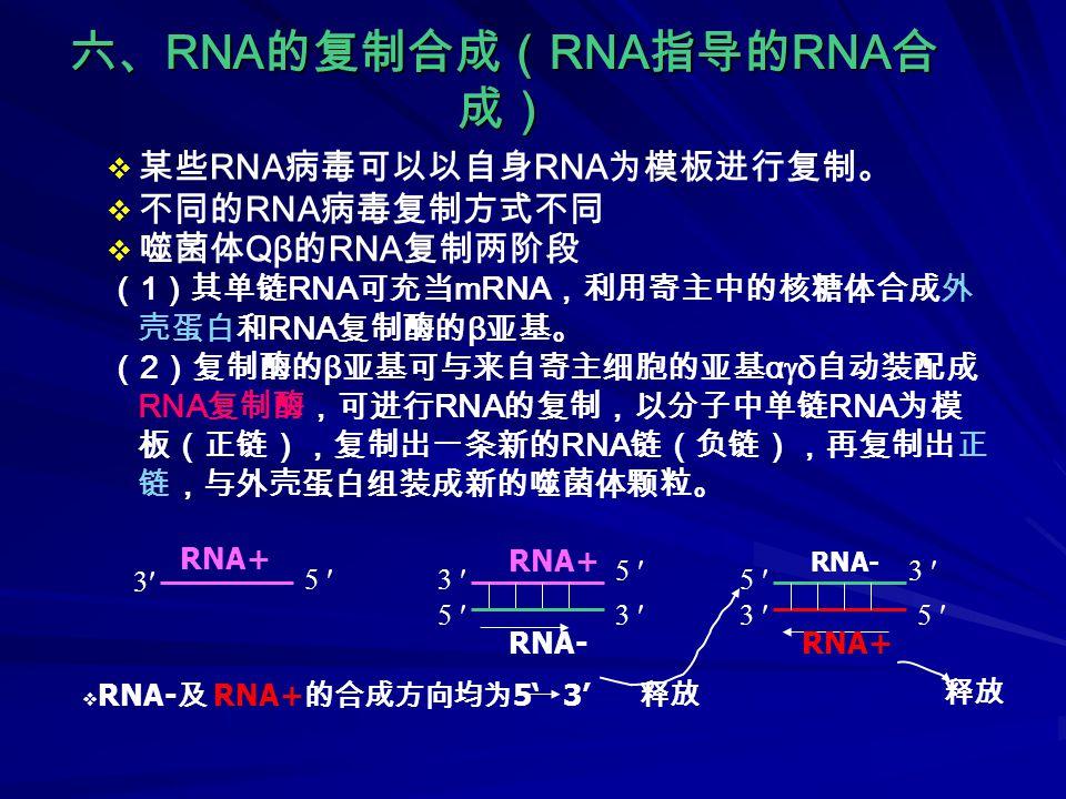 六、 RNA 的复制合成( RNA 指导的 RNA 合 成)  噬菌体 Qβ 的 RNA 复制两阶段 ( 1 )其单链 RNA 可充当 mRNA ,利用寄主中的核糖体合成外 壳蛋白和 RNA 复制酶的 β 亚基。 ( 2 )复制酶的 β 亚基可与来自寄主细胞的亚基 α  δ 自动装配成 RNA 复制酶,可进行 RNA 的复制,以分子中单链 RNA 为模 板(正链),复制出一条新的 RNA 链(负链),再复制出正 链,与外壳蛋白组装成新的噬菌体颗粒。  某些 RNA 病毒可以以自身 RNA 为模板进行复制。  不同的 RNA 病毒复制方式不同 5 RNA- 5 3 3 RNA+ 释放 3 5 3 3 5 5 RNA+ RNA-  RNA- 及 RNA+ 的合成方向均为 5' 3'