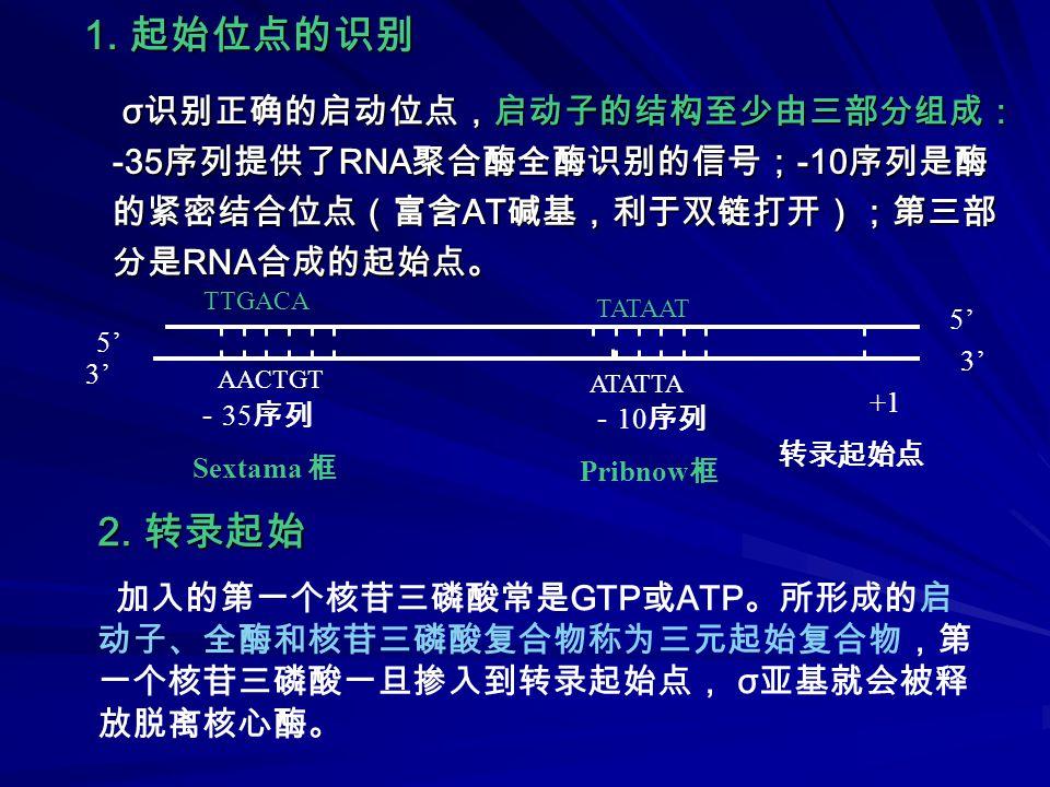 -35 -10 pppG 或 pppA 5'5' 5'5' 3'3' 3'3' 模板链 E  3.