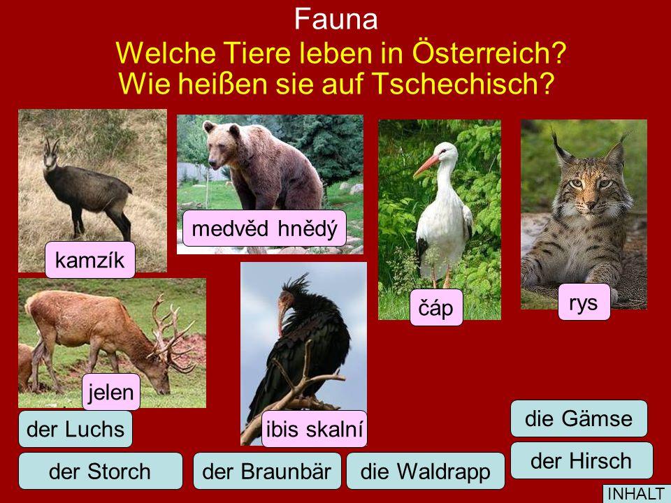 Flora Welche Pflanzen sind typisch für Österreich.