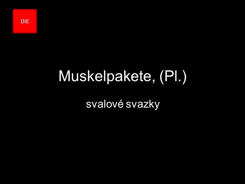 Muskelpakete, (Pl.) svalové svazky DIE