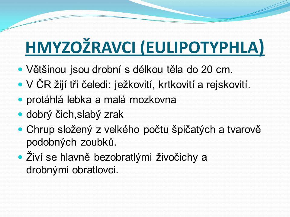 HMYZOŽRAVCI (EULIPOTYPHLA ) Většinou jsou drobní s délkou těla do 20 cm. V ČR žijí tři čeledi: ježkovití, krtkovití a rejskovití. protáhlá lebka a mal