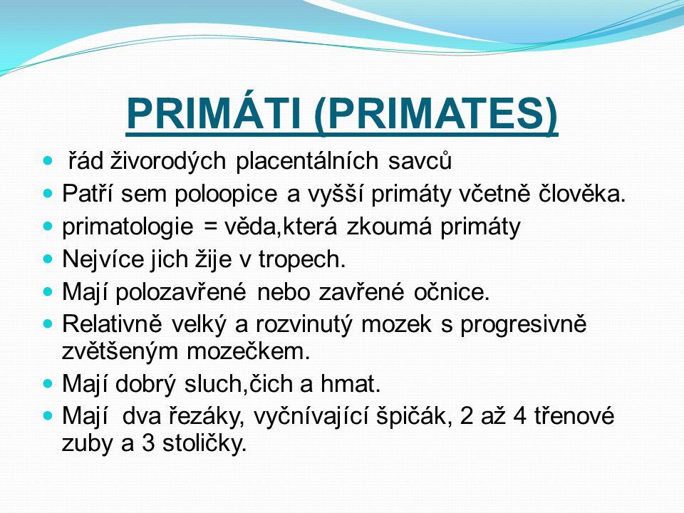 PRIMÁTI (PRIMATES) řád živorodých placentálních savců Patří sem poloopice a vyšší primáty včetně člověka. primatologie = věda,která zkoumá primáty Nej