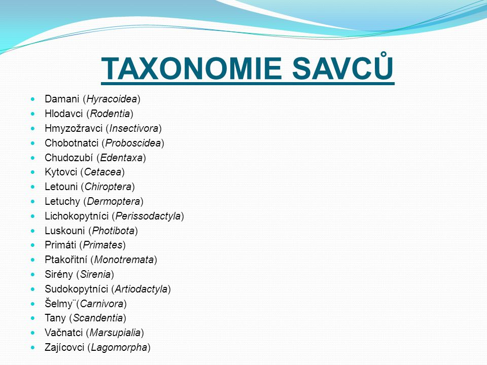 TAXONOMIE SAVCŮ Damani (Hyracoidea) Hlodavci (Rodentia) Hmyzožravci (Insectivora) Chobotnatci (Proboscidea) Chudozubí (Edentaxa) Kytovci (Cetacea) Let