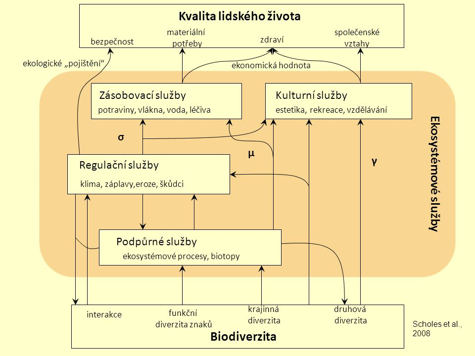 interakce funkční diverzita znaků krajinná diverzita druhová diverzita Biodiverzita bezpečnost materiální potřeby zdraví společenské vztahy Kvalita li