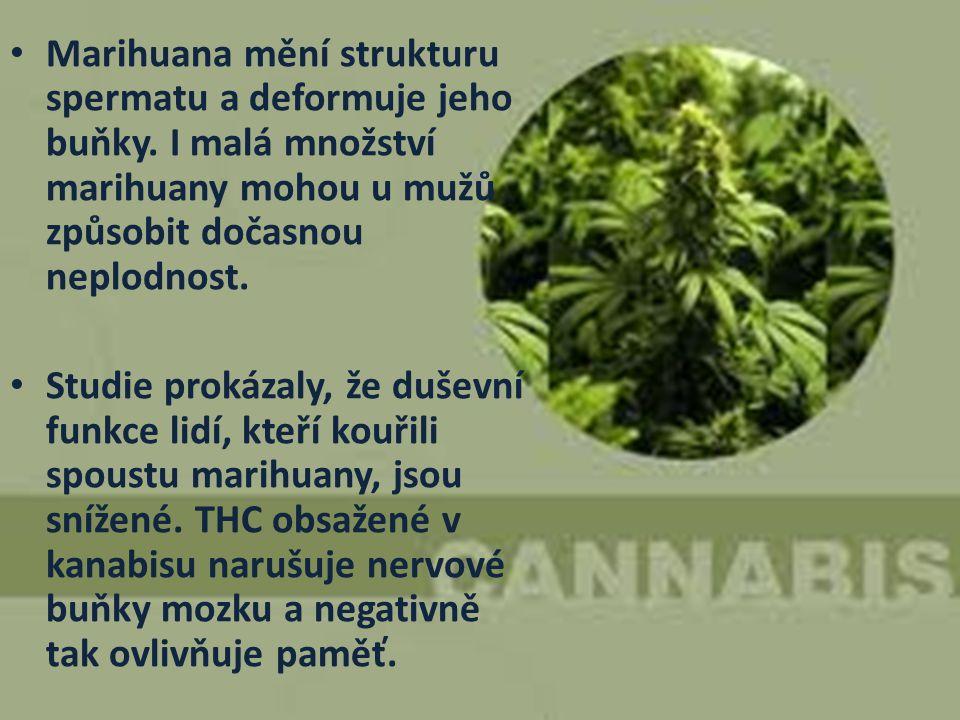 Marihuana mění strukturu spermatu a deformuje jeho buňky. I malá množství marihuany mohou u mužů způsobit dočasnou neplodnost. Studie prokázaly, že du