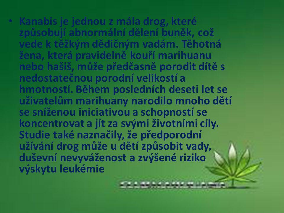 Kanabis je jednou z mála drog, které způsobují abnormální dělení buněk, což vede k těžkým dědičným vadám. Těhotná žena, která pravidelně kouří marihua